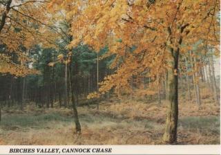 cannock_7