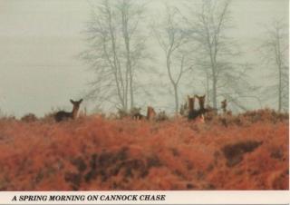 cannock-chase_7