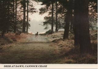 cannock-chase_9